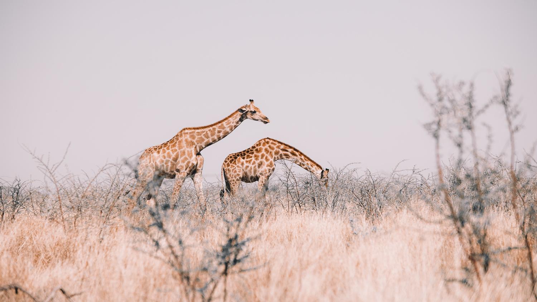 namibie parc national d'etosha